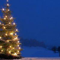 weihnachtsbaum-homepage